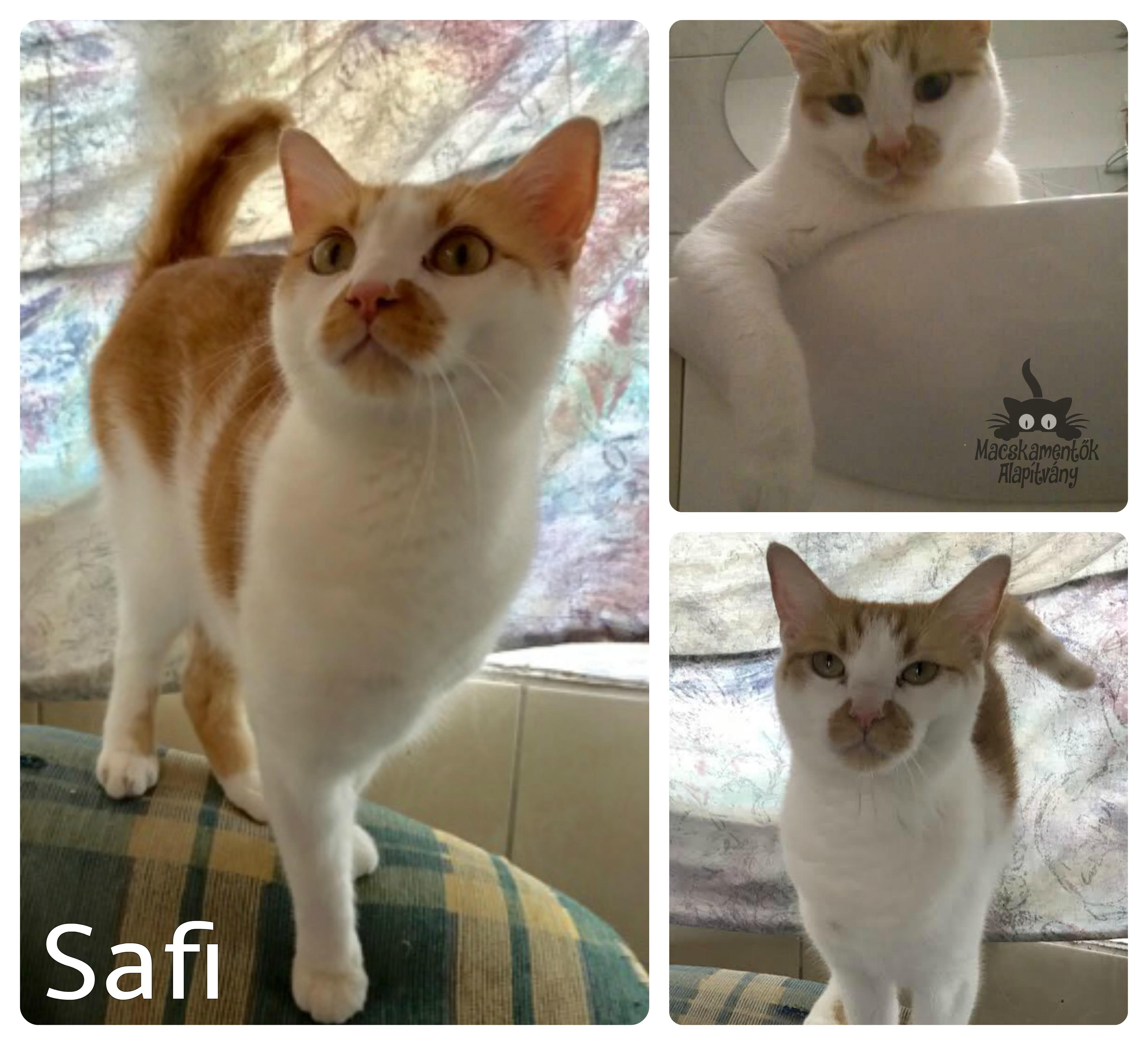 safi_0629.jpg