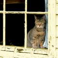 Ablakban alvó cuki macskák kerestetnek