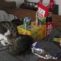 Egri cicák segítségre várnak