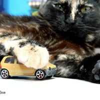 A Renault szereti a cicákat