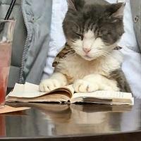 Képzett macskatulajdonosok