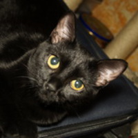 Macska tartásához szükséges eszközök