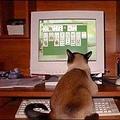 Az igazi macskatévé!