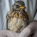 AI - Avian Influenza – madárinfluenza