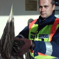 Megmentették a fokozottan védett madarat - 2016.04.04