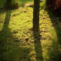 Mit ültessünk árnyékos helyre a kertben? (1. rész)