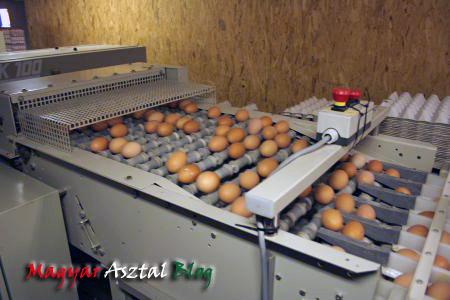 tojások.JPG