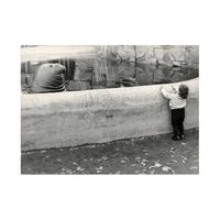Friedrich Seidenstücker mókás képei a berlini állatkertből (1925-1940)
