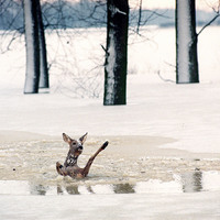 Válogatás az Év fotóriporterének képeiből - Balázs Attila: Mi vagyunk azok