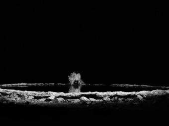 Sebastião Salgado: A fotográfia csendes drámája (videó)