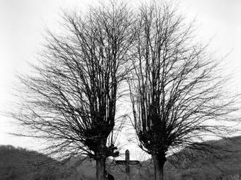 Fotós idézet –  Imogen Cunningham (1883-1976)