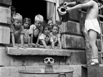 Manipulált a szurikátát fürdető gyerekek vicces fotója
