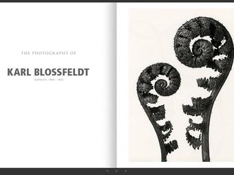 Portfólió – Karl Blossfeldt (1865-1932)