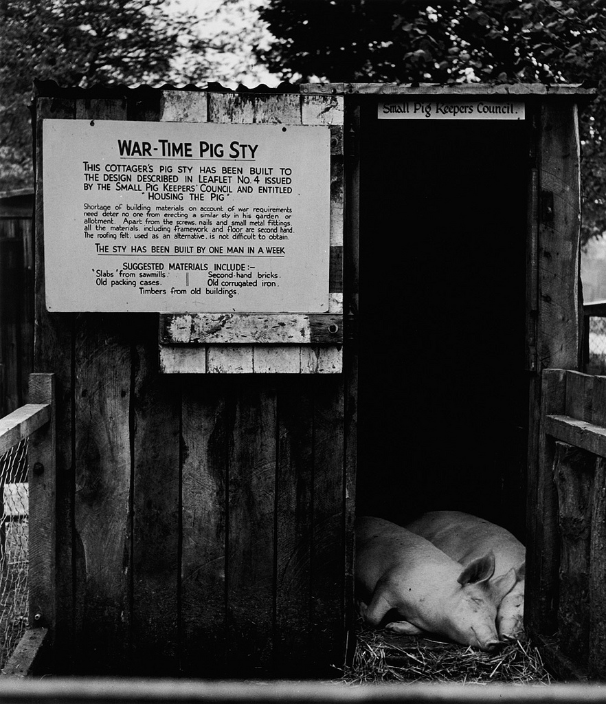Fotó:Wolfgang Suschitzky: London, Állatkert, 1941 © Wolfgang Suschitzky