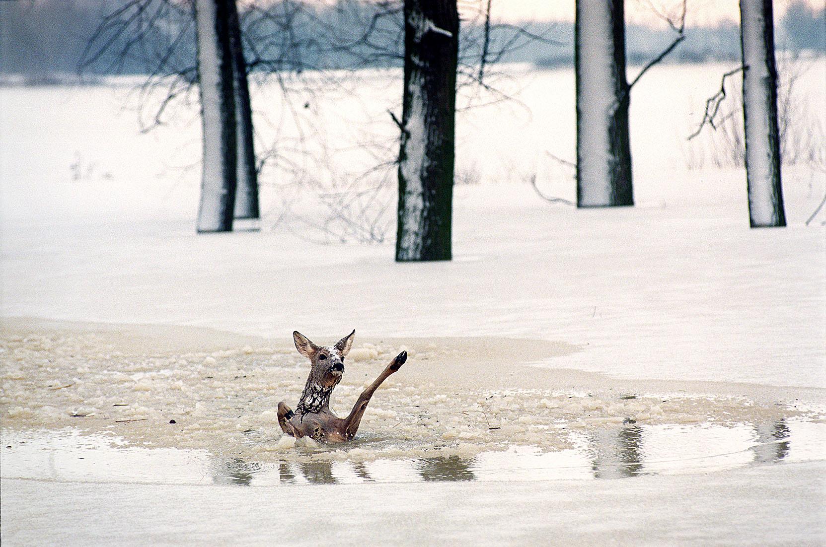 Fotó: Balázs Attila: Kisvarsány, 1995. december 28., 11 óra 18 perc
