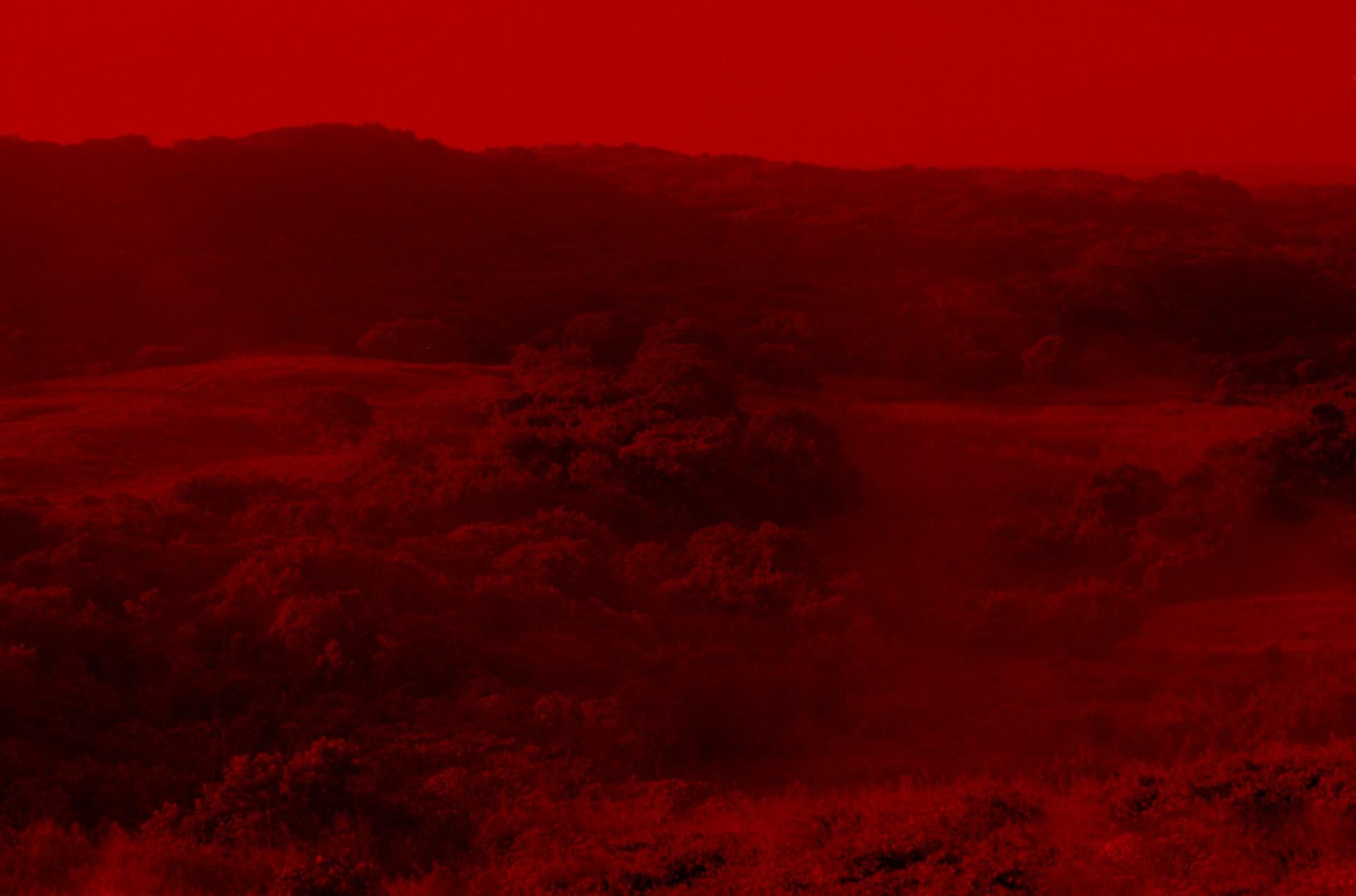 Fotó: Koleszár Adél:  A veracruzi tömegsír látképe, részlet Az erőszak sebei című sorozatból