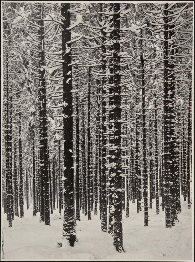 renger-patzsch-gebirgsforst-im-winter.jpg
