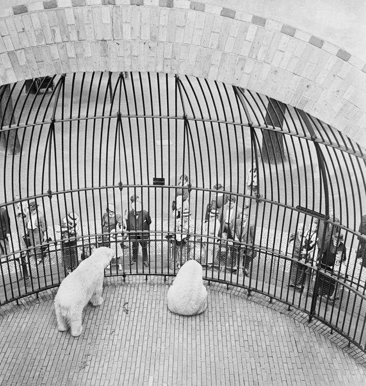 vishniac-polar-bears.jpg
