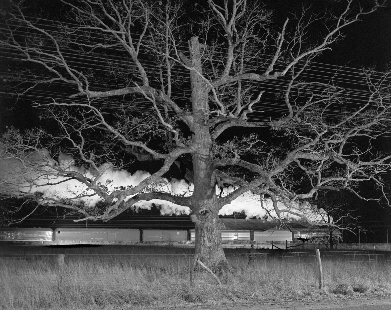 "Fotó: O. Winston Link: ""Giant Oak,"" Max Meadows, Va., Dec. 30, 1957 © O. Winston Link / O. Winston Link Museum, Roanoke, Virginia"