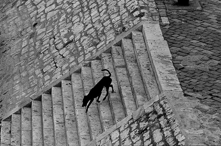 Fotó: Schäffer Zsuzsa: Fekete kutya, Budapest, 1982-1983 © Schäffer Zsuzsa