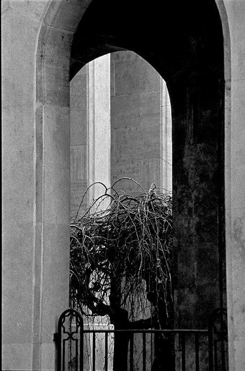 Fotó: Schäffer Zsuzsa: Temetőkert, Budapest © Schäffer Zsuzsa