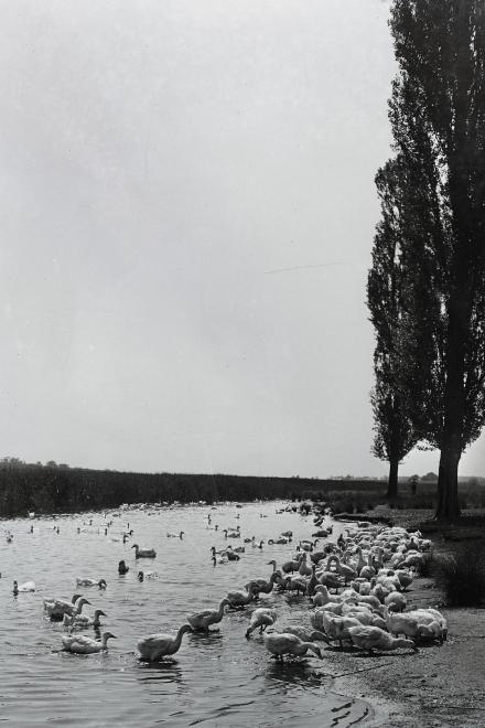 Fotó: Kotnyek Antal: Magyarország, 1955 © Fortepan