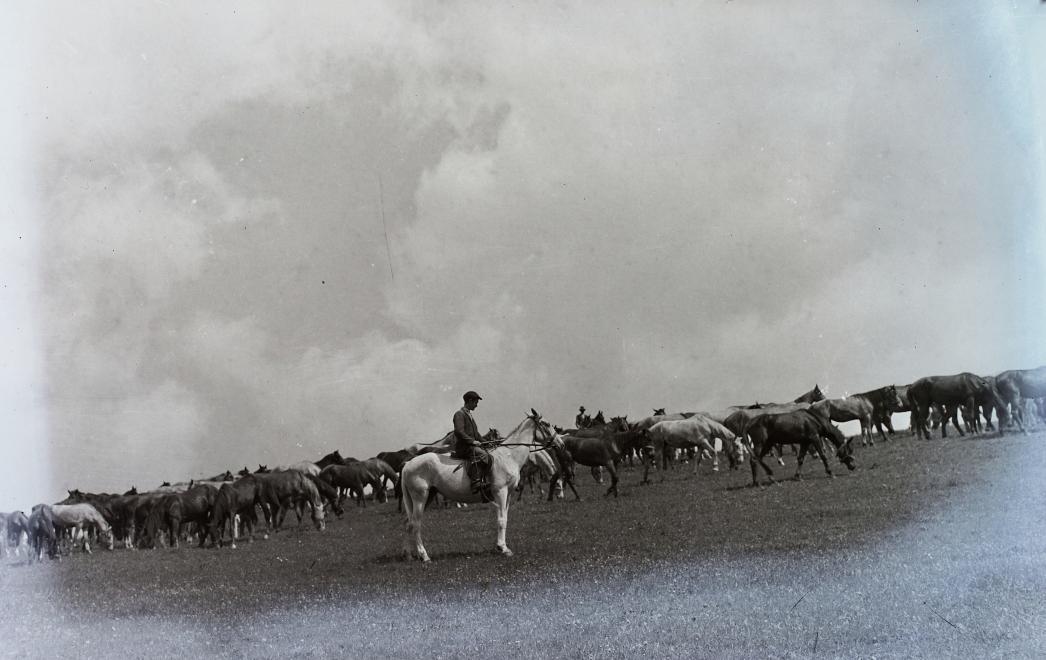 Fotó: Kotnyek Antal: Ménes, 1958 © Fortepan