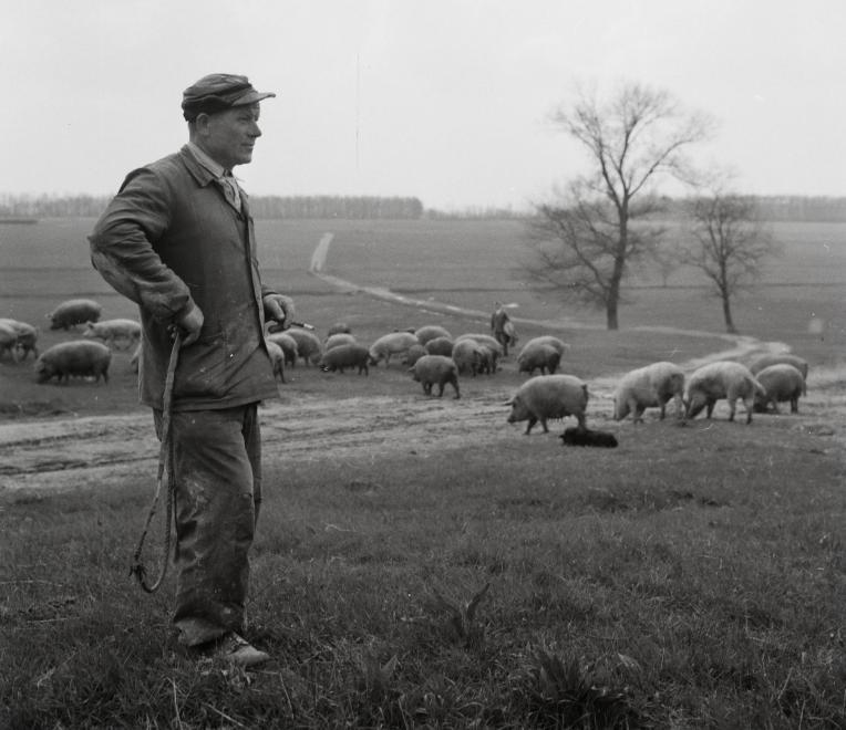 Fotó: Kotnyek Antal: Kondás, 1958 © Fortepan