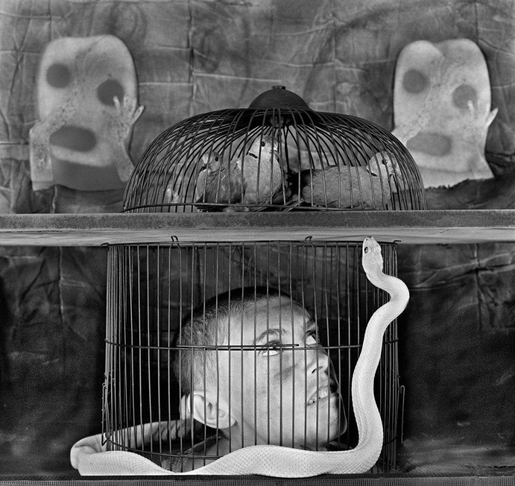 Fotó: Roger Ballen: Caged, 2011 © Roger Ballen/Stills Gallery