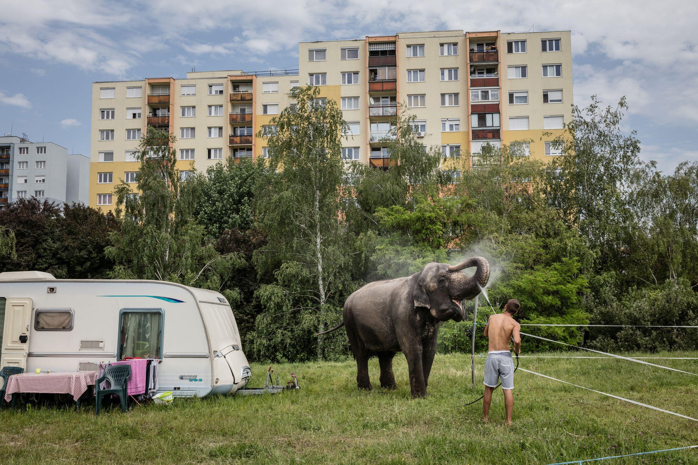 Művészet – műalkotás vagy művészeti tevékenység ábrázolása, fotóriporteri eszközökkel (egyedi) <br /><br />1. díj: Kállai Márton (Szabad Föld): Elefántfürdő<br />