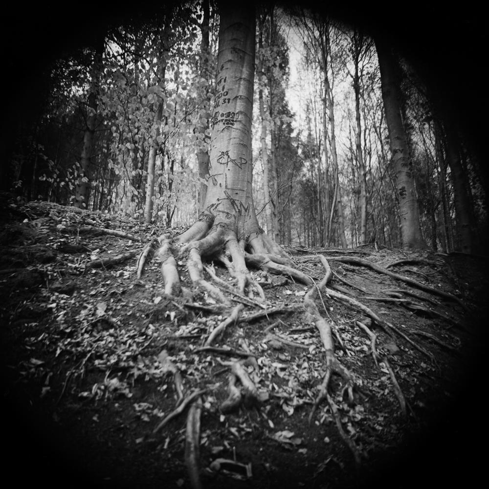 Fotó: Soltész István: Megjelölt fa, No.2; 2012 © Soltész István