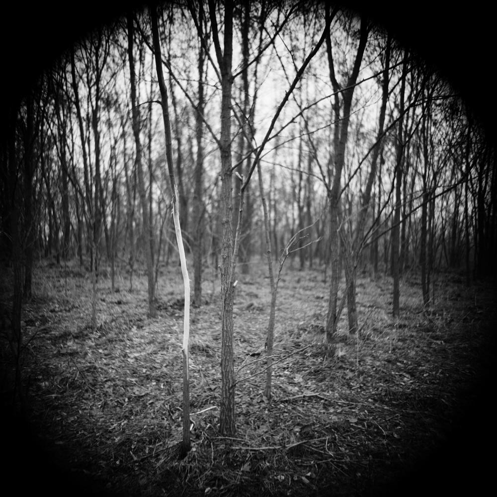 Fotó: Soltész István: Megjelölt fa, No.3; 2012 © Soltész István