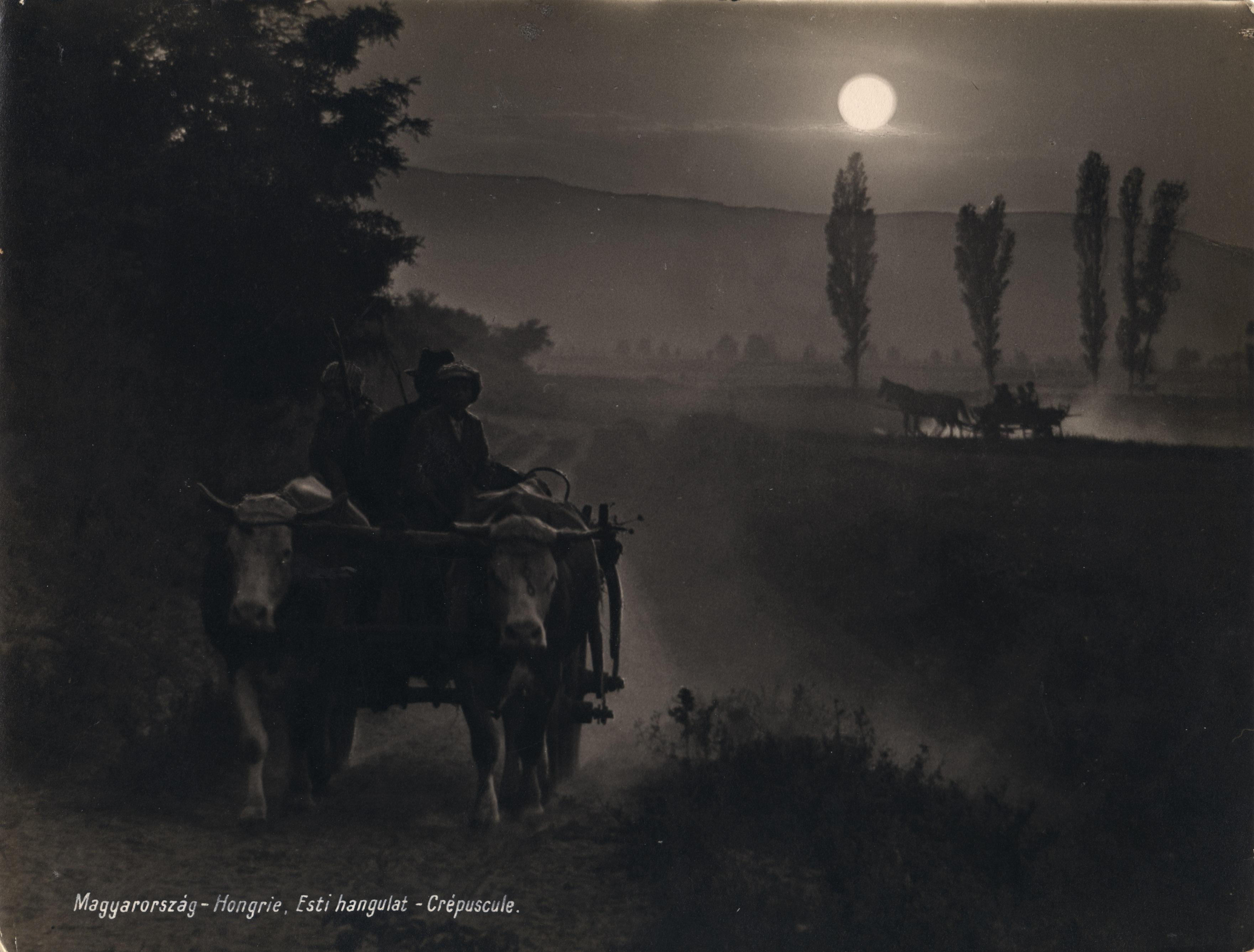 Fotó: Dulovits Jenő: Esti hangulat (Naplemente, ökrösszekér közeledik a poros úton), 1930 © Magyar Fotográfiai Múzeum