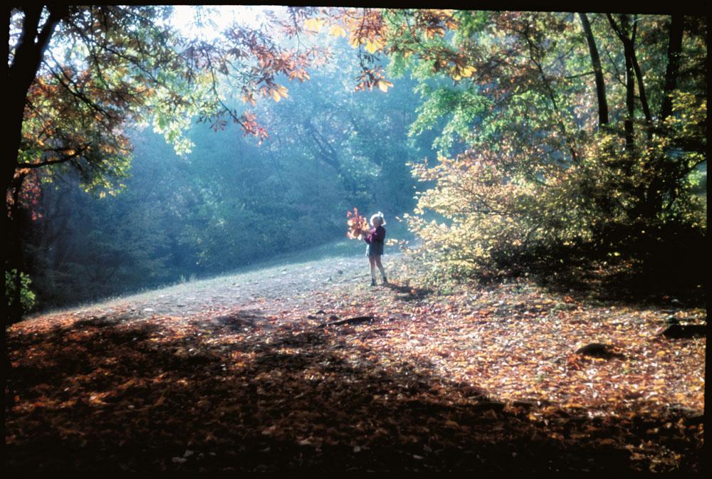 Fotó: Dulovits Jenő: Őszi fények az erdei tisztáson<br /><br />(A tanár-fotóművész kedvelt témája, amelyet az 1930-as évek végén már nem fekete-fehér filmre, hanem Agfa fordítós nyersanyagra fényképezett.)<br /><br />© 2002, Dulovits Jenő jogutódja/Fejér Zoltán gyűjteménye<br /><br />