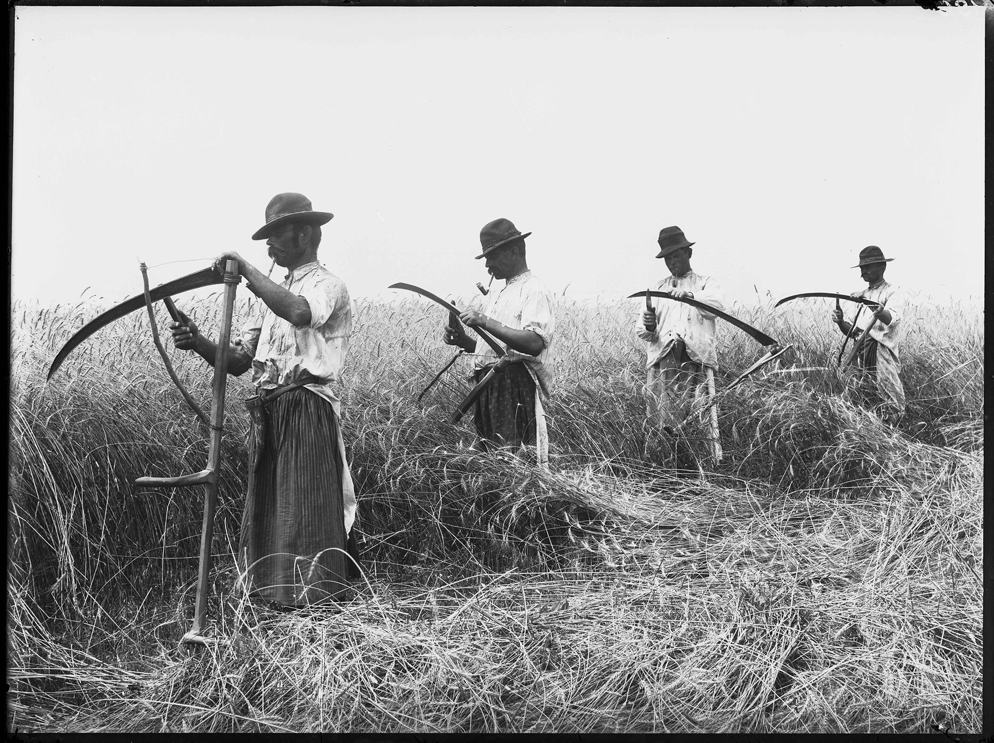 Fotó: Plohn József: Kaszájukat fenő aratók fehér vászon ingben és gatyában, bokáig érő festő kötőben. © Tornyai János Múzeum gyűjteménye, Hódmezővásárhely