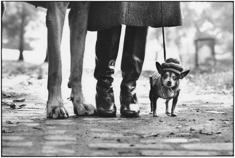 Fotó: Eliott Erwitt: Felix, Gladys and Rover, New York City, 1974 © Magnum Photos