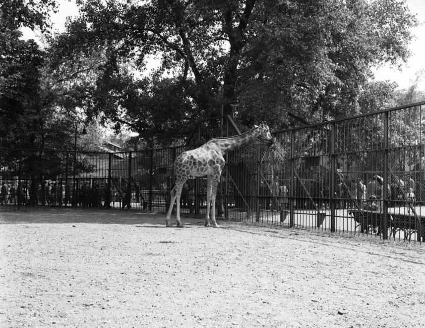 zoo004.jpg