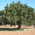 Folyékony arany tégelybe zárva - marokkói  argánolajos natúrkozmetikumok