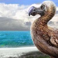 Egy dodó elmélkedései