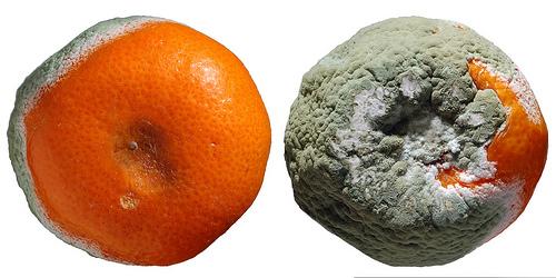 http://m.blog.hu/ma/mandiner/image/1010/orange-rot2.jpg
