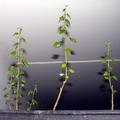 Gödör búcsúztató plusz növény plusz babanapló