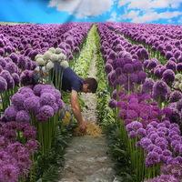 Illúziók és újrahasznosítás a virágkiállításon