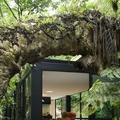 Erdőisten árnyékában - Forest Home