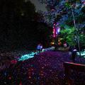 Varázslatos séta a fényerdőben