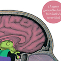 Láss csodát, a kreatív agyunk mi vagyunk