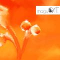 Virágok, vízcseppek és minden, ami apró – Török Andrea