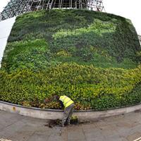 Van Gogh festmény 8000 növényből