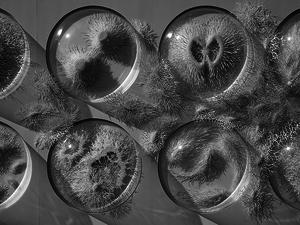 Fenséges mikrobiológiai felfedezés papírlapokkal