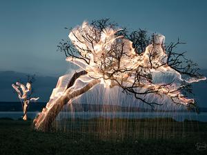 Néhány villanás a világ leggyönyörűbb fényfestett fái közül