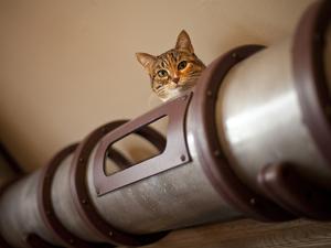 Steampunk macskaság egy kaliforniai lakásban...